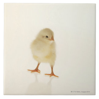 Baby chicken tile