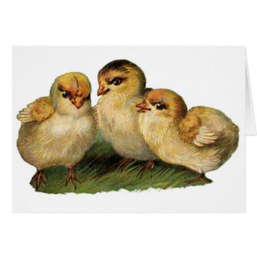 baby-chicks-3.jpg tarjeta de felicitación