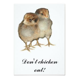 Baby chicks araucana chickens ornithology birds card