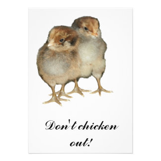 Baby chicks araucana chickens ornithology birds personalized announcement
