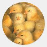 Baby Chicks Chick Chicken Chickens Classic Round Sticker
