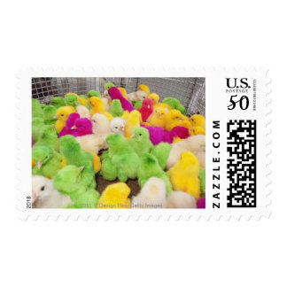 Baby Chicks In A Pen At A Market Colored By Dye Postage