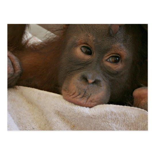 Baby Chimp Postcard