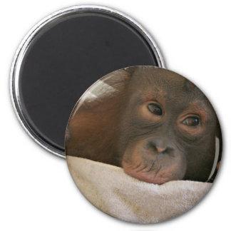 Baby Chimp Round Magnet