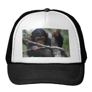 Baby Chimpanzee Trucker Hat