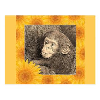 baby chimpanzeeh,retro look postcard