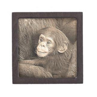 baby chimpanzeeh,retro look premium trinket box