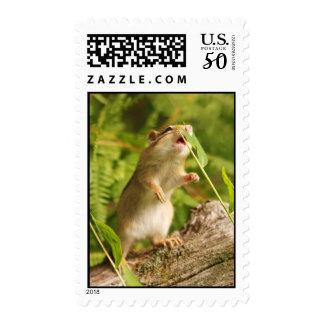 Baby Chipmunk Reaching Postage