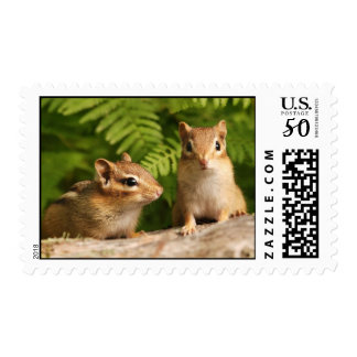 Baby Chipmunk Siblings Postage