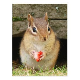 baby chipmunk with strawberry postcard