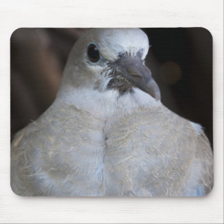 Baby Collard Dove Mouse Pad
