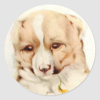 Baby Collie - SUPER CUTE ! Classic Round Sticker