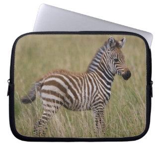 Baby Common Zebra, Equus burchelli Laptop Sleeves