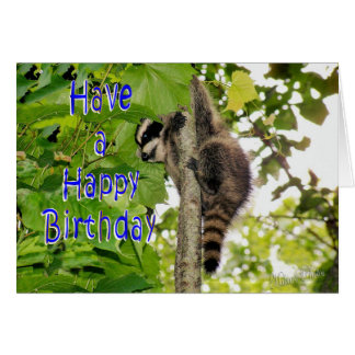 Baby Coon Bday wishes Greeting Card