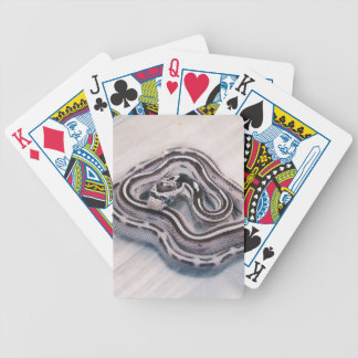 Baby Corn Snake Bicycle Playing Cards