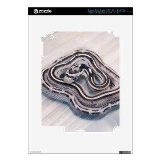 Baby Corn Snake iPad 3 (Wi-Fi/Wi-Fi + 4G LTE) Decal For iPad 3