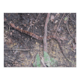 Baby Cottonmouth Moccasin Poster
