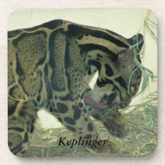 Baby Cougar Personalized Coasters