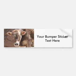 Baby Cow - Brown Baby Calf Close Up Face Bumper Sticker