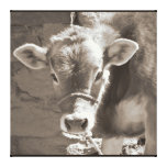 Baby Cow - Brown Baby Calf Close Up Face Canvas Print
