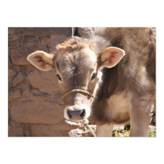 Baby Cow - Brown Baby Calf Close Up Face Custom Invitation