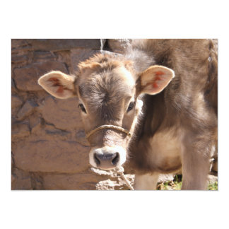 """Baby Cow - Brown Baby Calf Close Up Face 5.5"""" X 7.5"""" Invitation Card"""