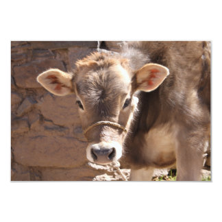 Baby Cow - Brown Baby Calf Close Up Face Personalized Invite