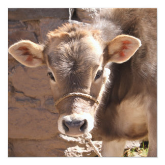 Baby Cow - Brown Baby Calf Close Up Face Personalized Announcement