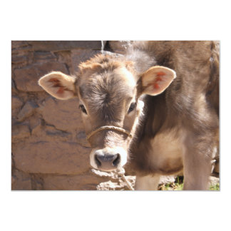 """Baby Cow - Brown Baby Calf Close Up Face 4.5"""" X 6.25"""" Invitation Card"""