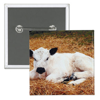 Baby Cow, Calf Button