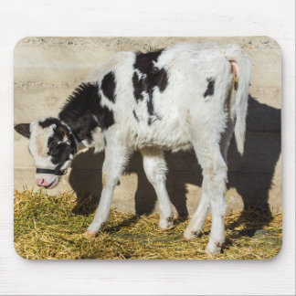 Baby Cow Eats Lunch In The Sun Mouse Pad