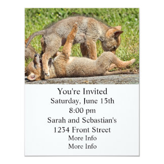 Baby Coyote Brothers Fighting Card