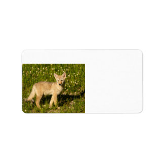 baby coyote label