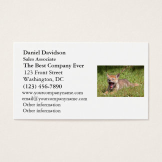 Baby Coyote Yawning Business Card