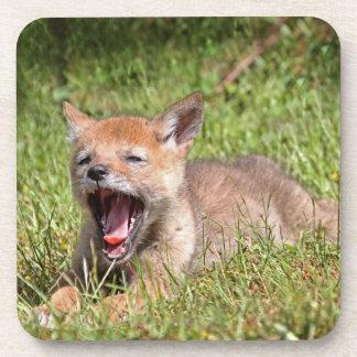 Baby Coyote Yawning Coasters