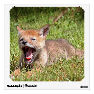 Baby Coyote Yawning Wall Graphics