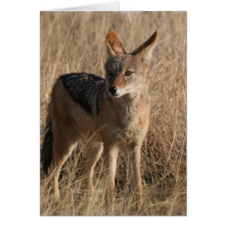 Baby Coyotes Greeting Card