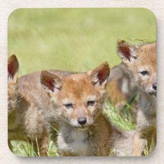 Baby Coyotes Photo Beverage Coasters