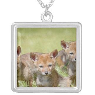 Baby Coyotes Photo Jewelry