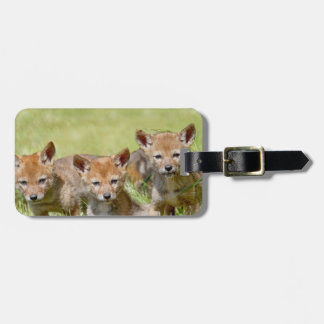 Baby Coyotes Photo Tags For Luggage