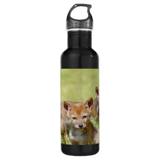 Baby Coyotes Photo Stainless Steel Water Bottle