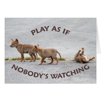 Baby Coyotes Playing Cards