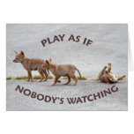 Baby Coyotes Playing Greeting Card