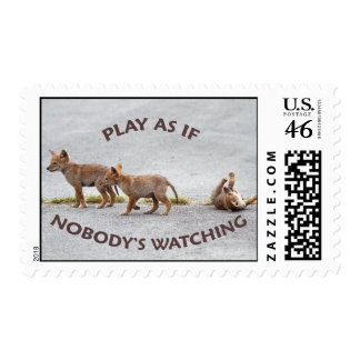 Baby Coyotes Playing Stamp