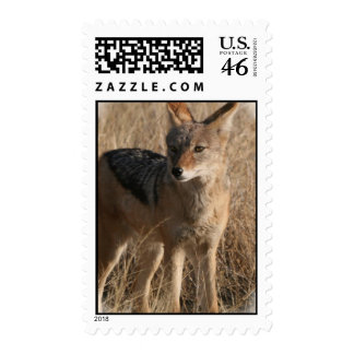 Baby Coyotes Postage Stamp