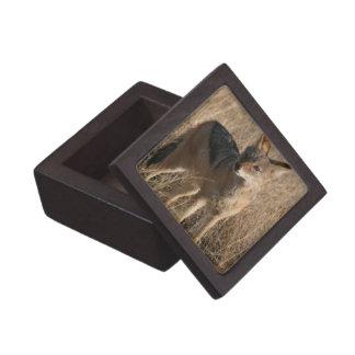 Baby Coyotes Premium Gift Box