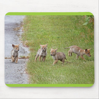 Baby Coyotes Running and Playing Mouse Pad