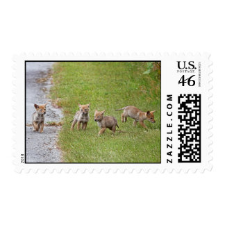 Baby Coyotes Running and Playing Postage Stamp