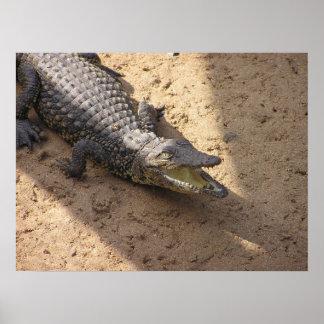 Baby Crocodile Poster