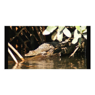 Baby Crocodile San Blas Mexico Card